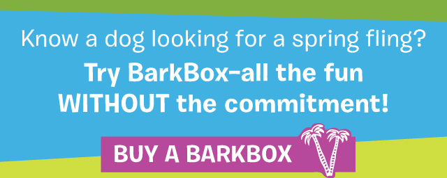Try BarkBox - all the fun without the commitment!