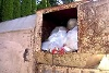 Baby found in trash compactor