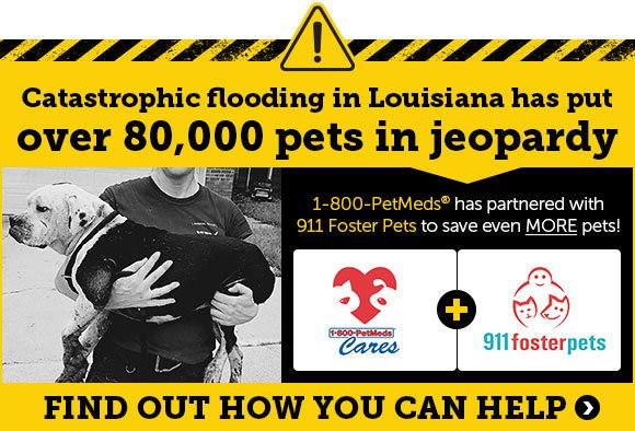 Catastrophic flooding in Louisiana has put 80,000 pets in jeopardy